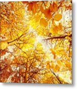 Trees Toward The Sun Metal Print