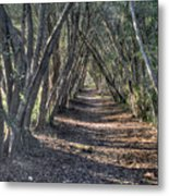 Trees Under Cover 3 Metal Print