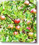 Trees With Red Apples In An Orchard Metal Print