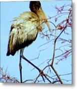 Treetop Stork Metal Print