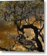 Treetop Sunset Metal Print