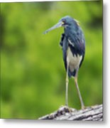 Tri-color Heron Metal Print
