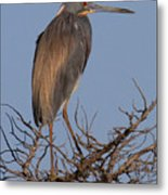 Tri Color Heron Metal Print