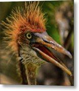 Tri Colored Heron Chick Metal Print