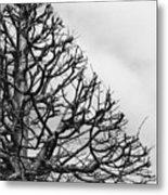 Triangle Tree Metal Print