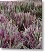Tricolor Moses In The Cradle Plant Metal Print