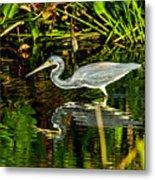Tricolored Heron 5 Metal Print