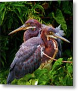 Tricolored Siblings Metal Print