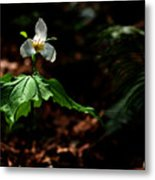 Trillium In The Woods Metal Print
