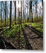 Trillium Trail Metal Print
