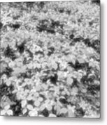 Trilliums On The Forest Floor Bw Metal Print