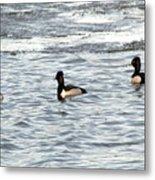 Trio Of Ducks Metal Print