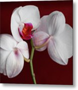 Trio Of Orchids Metal Print