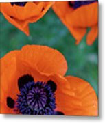 Trio Of Poppies Metal Print