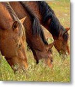 Triple Mustang Treat Metal Print