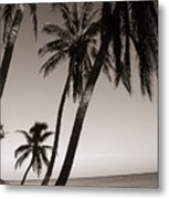 Triple Palms Metal Print