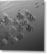 Tropical Black And White Metal Print