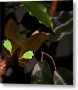 Tropical Buterfly Metal Print