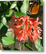 Tropical Butterfly On Flower Metal Print