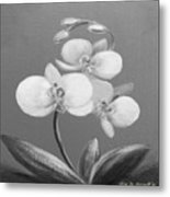 Tropical Elegance In Black And White Metal Print