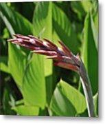 Tropical Flower Buds Metal Print