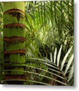 Tropical Forest Jungle Metal Print