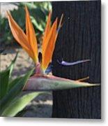Tropical Garden Photo Of A Bird Of Paradise  Metal Print