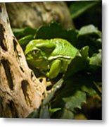 Tropical Green Frog Metal Print