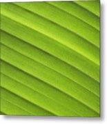 Tropical Leaf Patterns Metal Print