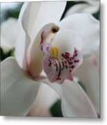 Tropical Orchid Metal Print