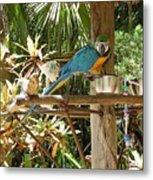 Tropical Parrot Metal Print