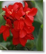 Tropical Red Canna Lilly Metal Print