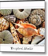 Tropical Shells... Greeting Card Metal Print by Kaye Menner