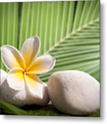 Tropical Still Life Metal Print