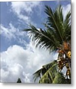 Tropical Treat Metal Print