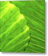 Tropical Vibrant Green Metal Print