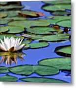 Tropical Water Lily Metal Print