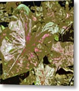 Tropicals Metal Print