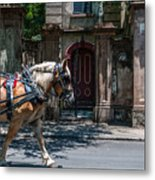 Trotting Into The Past Metal Print