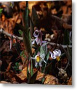 Trout Lillie In Lost Valley Metal Print