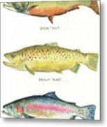 Trout species Metal Print