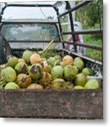Truckload Of Coconuts Metal Print