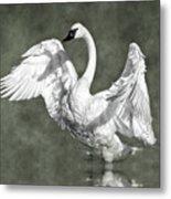Trumpeter Swan In The Fog Metal Print