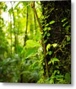 Trunk Of The Jungle Metal Print