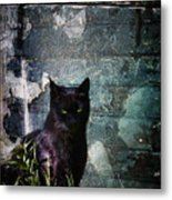 Truth Or Stare... Metal Print