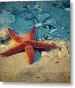 Try Not To Star-e Metal Print