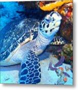 Tucked Away Turtle Metal Print