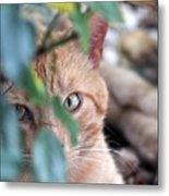 Tucker - The Cat Metal Print