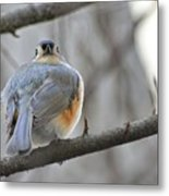 Tufted Titmouse 02 Metal Print