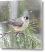 Tufted Titmouse - A Winter Delight Metal Print